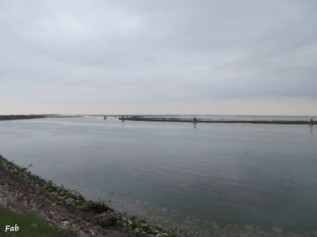 Lio Piccolo, Laguna di Venezia